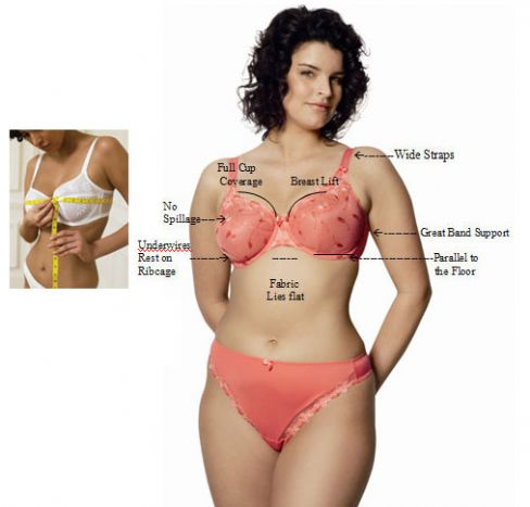 Bra Fitting - How to Measure Bra Size Image